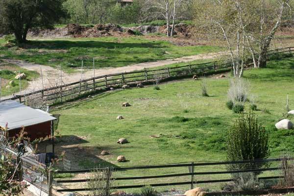 Sulcata tortoise enclosure